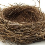 Is Nesting (Continuing to Share Residence After Divorce) a Good Idea?
